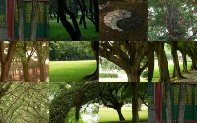 Sur les arbres et la pratique de Zhan Zhuang